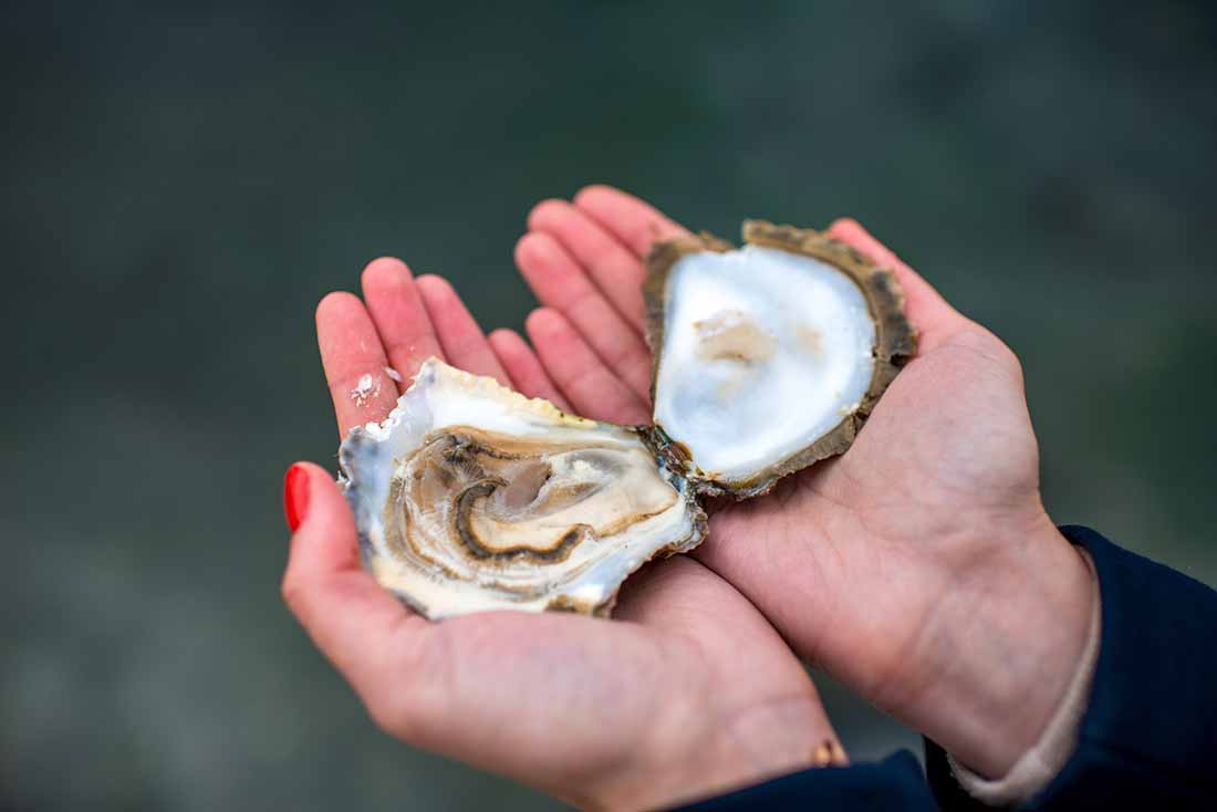 Low carb foods high in vitamin D - oysters