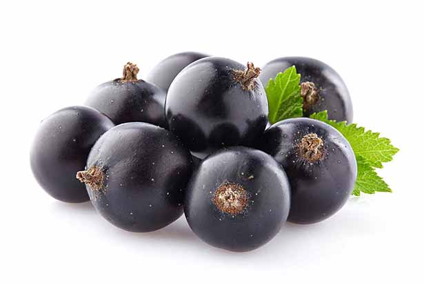 Low carb foods high in polyphenol antioxidants - blackcurrants