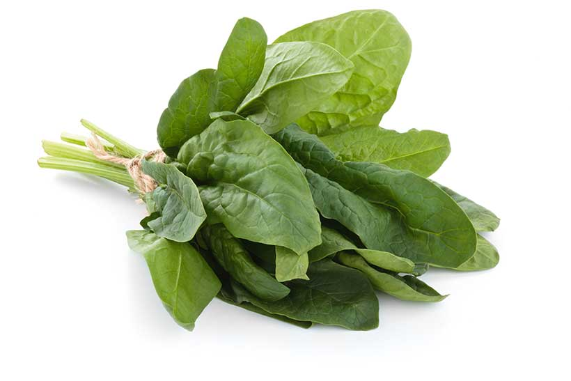 Picture of a stalk of spinach with many green leaves.