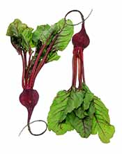 Picture of beets - low carb vegetables