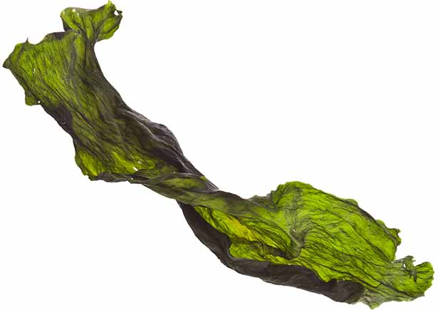 Picture of dried kelp
