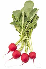 Picture of radishes - low carb vegetables