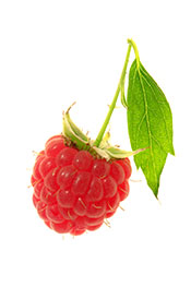 Picture of a raspberry: raspberries make great keto snacks.