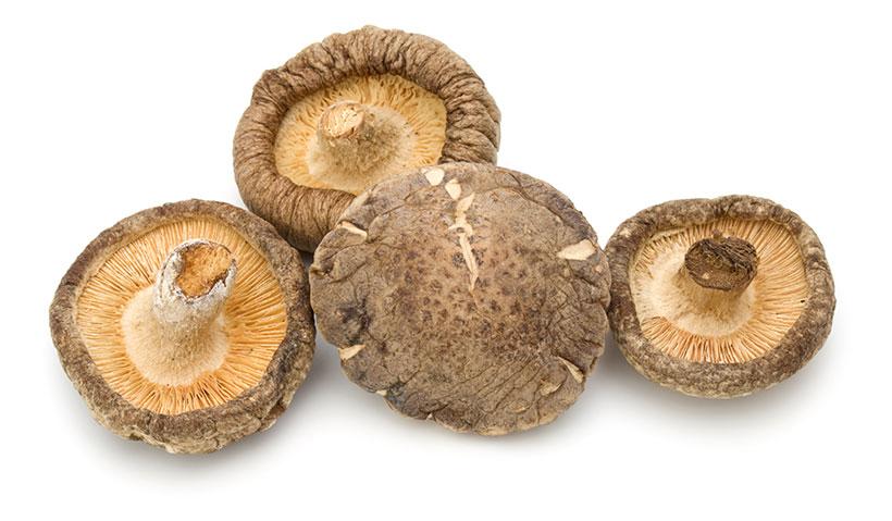 Picture of Shiitake Mushrooms (Lentinula edodes)