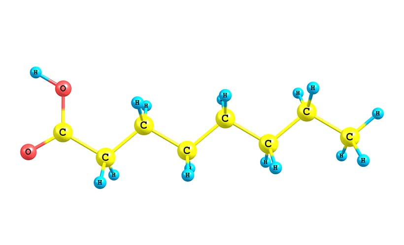Picture showing the chemical structure of caprylic acid - a medium-chain fatty acid (MCFA)