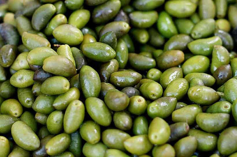 Crescent Shape Lucques Olives After Harvesting Them.