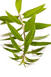 Dried Lemon Verbena Leaves,