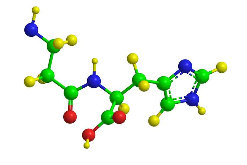 The Molecular Structure of the Amino Acid Carnosine,